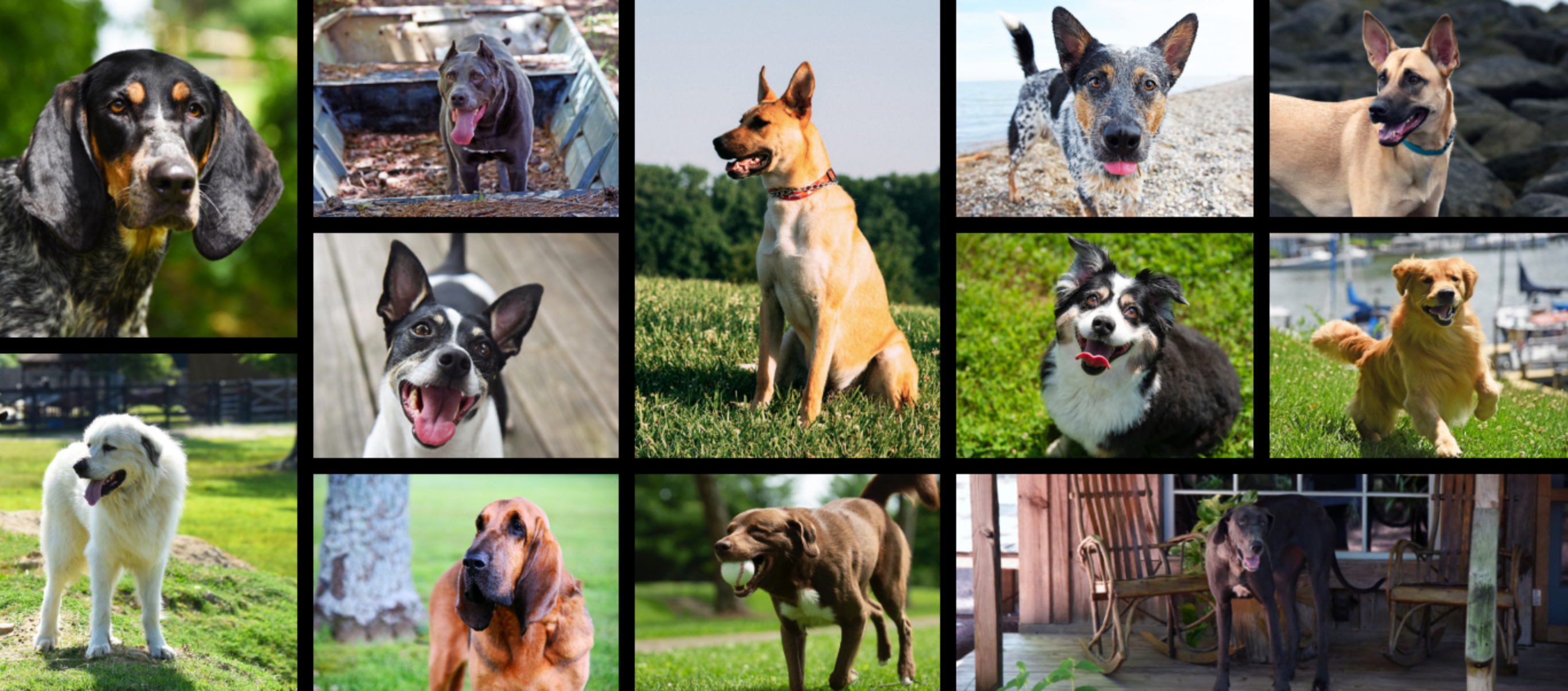 Early Times Whiskey All American Dogs contest winners. All American dogs are shown in a collage.