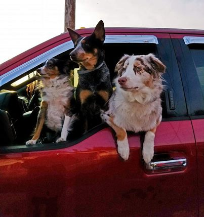 Hound Hero Dog Image